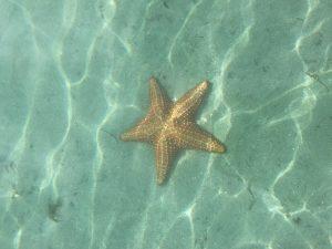 Seestern am Playas de las Estrellas