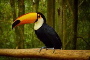 Parque das Aves, Brasilien