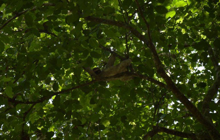 Manuel Antonio Nationalpark Faultier