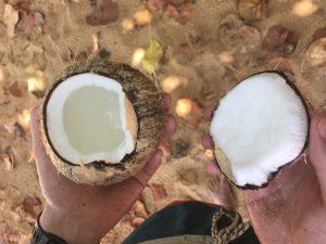 Frische Kokosnuss am Playa Bluff, Bocas del Toro, Panama