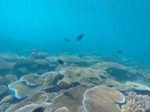 Unterwasserwelt Octopus Resort, Waya Island, Fiji