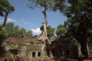 Ta Phrom, Tempel, Tempelanlage, Angkor, Siem Reap, Kambodscha